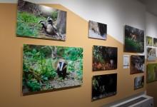 Exposition photographique à Morges